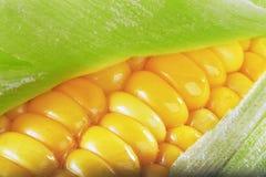 Gebutterte Maiskörner Stockbild