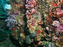 Gecamoufleerde Scorpionfish stock foto's