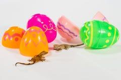 Gechi di Pasqua Immagini Stock