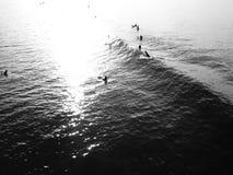 Geck johlt und brüllt, während er eine Welle in Huntington fängt stock video footage