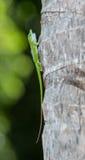 Gecko à l'arbre image libre de droits