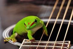 Gecko ημέρας της Μαδαγασκάρης Στοκ φωτογραφία με δικαίωμα ελεύθερης χρήσης
