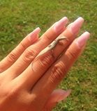 Gecko σε διαθεσιμότητα Στοκ εικόνα με δικαίωμα ελεύθερης χρήσης