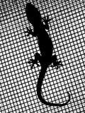 Gecko στη σκιαγραφία Στοκ Φωτογραφίες
