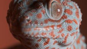 Gecko στον πορτοκαλή τοίχο φιλμ μικρού μήκους