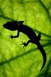 Gecko леопарда Стоковое фото RF