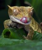 Gecko stockfotografie