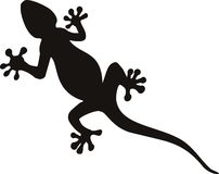 Free Gecko Stock Photos - 12081623