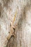gecko photo stock