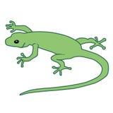 gecko royaltyfri bild