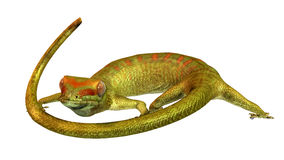 gecko απεικόνιση αποθεμάτων