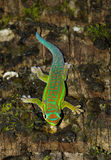 Gecko Photo libre de droits