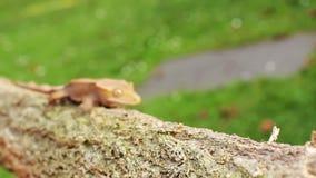 Gecko φιλμ μικρού μήκους