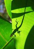 Gecko Lizenzfreie Stockfotos