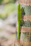 gecko photos stock
