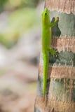 gecko στοκ φωτογραφίες