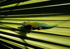 gecko Photographie stock