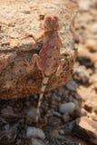 gecko stockbild