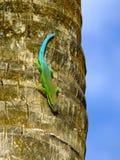 gecko Стоковые Фото