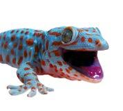 Gecko imagem de stock