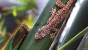 Gecko auf Bambusstock stockfotos