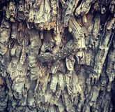 Gecko auf dem Baum stockbilder