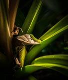Gecko auf einer Aloeanlage stockfotos