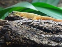 Gecko auf Holz lizenzfreie stockbilder