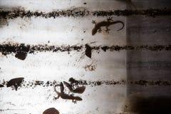 Gecko auf Plastikdach stockfotografie