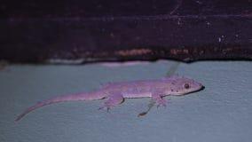 Gecko auf Wand stockbilder