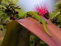 Gecko Bridge Royalty Free Stock Photography