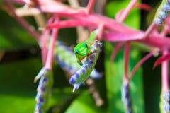 Gecko coloré image libre de droits