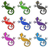 Gecko colors Royalty Free Stock Photo