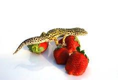gecko con gli strawberrys Fotografia Stock