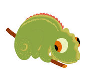 Gecko so cute Stock Images