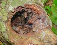 Gecko d'arbre image stock