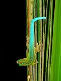 Gecko dans la forme de note de musique image stock