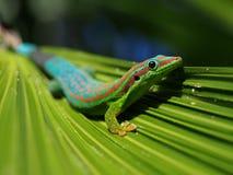 Gecko de jour image libre de droits