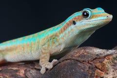 Gecko de jour de Reunion Island image libre de droits
