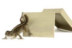 Gecko de panthère photographie stock