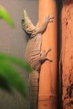 Gecko debout de jour image libre de droits