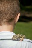 Gecko dell'animale domestico fotografia stock