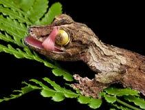 Gecko, der Auge leckt stockbild
