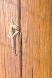 Gecko, der über ein Stück Holz geht Stockfotos