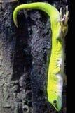 Gecko di giorno del Madagascar fotografia stock libera da diritti