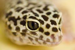 Gecko do leopardo imagem de stock