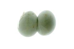 Free Gecko Egg Stock Image - 15822241