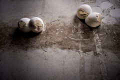 Gecko eggs stick on the wall Royalty Free Stock Photo