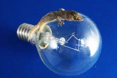 Gecko-Eidechse und Glühlampe lizenzfreie stockbilder