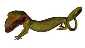 Gecko eller ödla och dess tunga Arkivbild